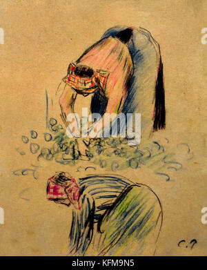 La Cueilette de pois - Pea pick by Camille Pissarro 1830-1903 France French - Stock Photo