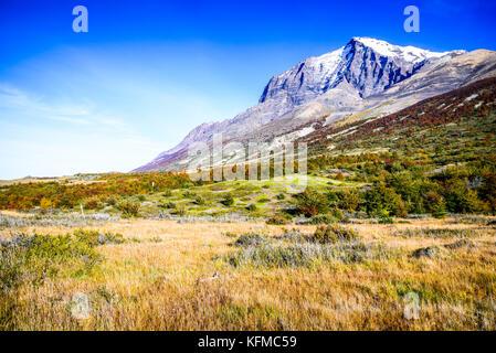 Patagonia, Chile - Torres del Paine landscape with Guanaco. Cordillera del Paine, Magelanes Region, South America. - Stock Photo