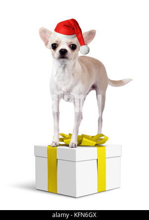 Chihuahua Dog on yellow gift box with santa hat, Christmas concept - Stock Photo
