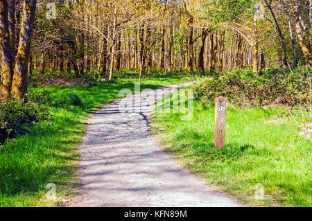 West Highland Way trail through Queen Elizabeth Forest, Scotland - Stock Photo