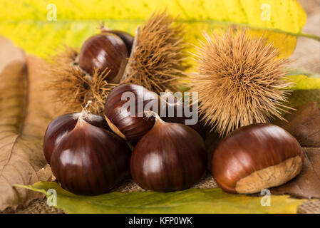 Fresh sweet chestnuts with shells - Stock Photo