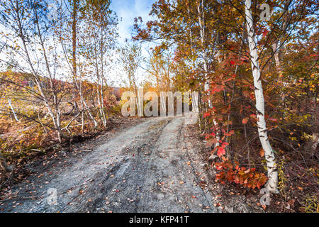 Colorful birch trees line the dirt path at Lake Rutherford at High Point State Park, NJ, on a sunny afternoon in - Stock Photo