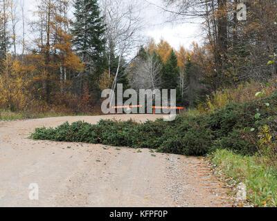 Quebec,Canada. A fallen tree blocks a gravel road in Saint-Alphonse-Rodriquez - Stock Photo