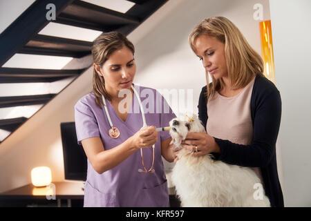 Vet And Dog Owner Giving Medicine Drug To Dog - Stock Photo