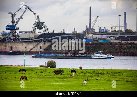 Rhine meadows,in Duisburg Hochemmerich, Germany, Horses, bridge over river Rhine, industry, - Stock Photo