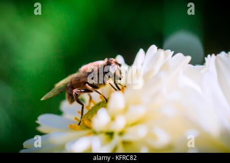 Bee Diaries - Stock Photo