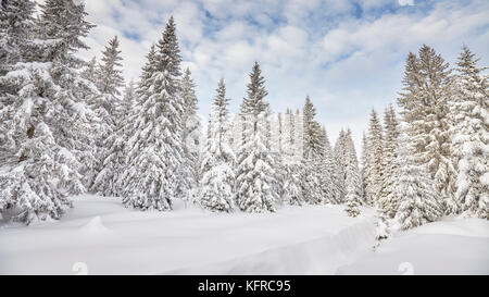 Winter landscape with snow covered trees. - Stock Photo