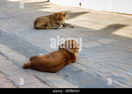 two red dogs lie on a stone tile - Stock Photo