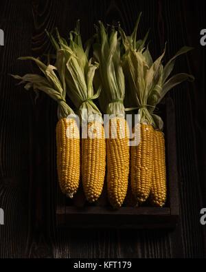 Box full of fresh corn cobs on the dark rough wood - Stock Photo