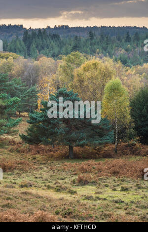 Dark clouds over trees of the New Forest National Park in Hampshire, UK - Stock Photo