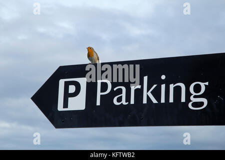 robin on car park sign, Carrick-a-Rede Rope Bridge, Ballintoy, Co. Antrim, Northern Ireland - Stock Photo