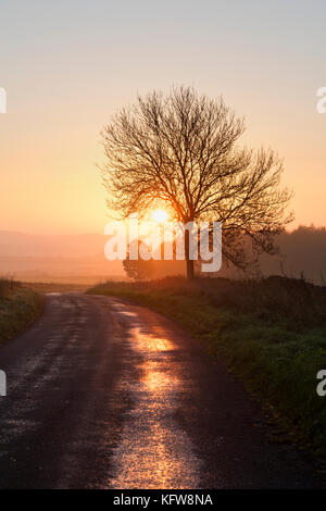 Silhouette tree and road at sunrise in autumn. Nr Chadlington, Oxfordshire, Cotswolds, England - Stock Photo