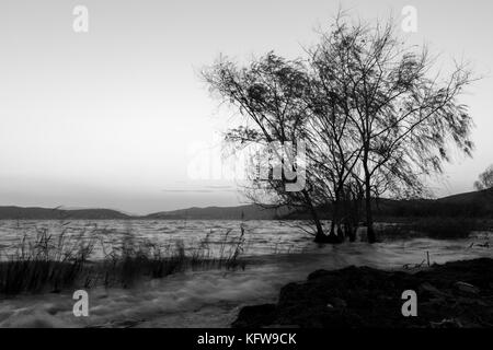 Strong wind at the lake, with blurred trees motion and waves on the water, with a clean sky with soft tones on the - Stock Photo
