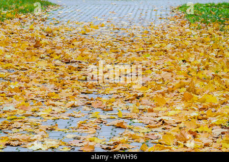 Yellow Maple Fallen Leaves on the on the Sidewalk Paved with Gray Concrete Paving Stones. Autumn Approach, Season - Stock Photo