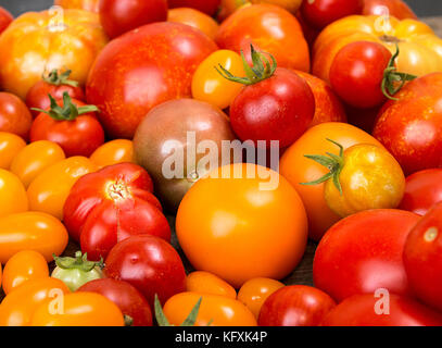 Various different color organic homegrown tomatoes. Red, yellow, orange and green tomatoes. Healthy vegetarian food - Stock Photo