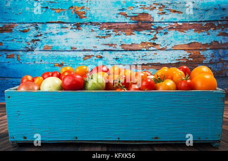 Various different color organic homegrown tomatoes in blue box against old blue wooden background. Red, yellow, - Stock Photo