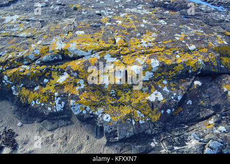 Lichen on rocks - Stock Photo