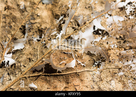Closeup of a leaf partially decomposed during winter - Stock Photo
