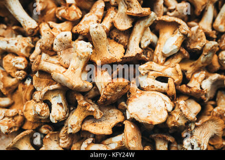 Close up picture of forest mushroom boletus - Stock Photo