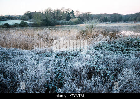 Frost tracery. A study of frost on leaves, twigs and grass stems. Winter enhances the beauty of nature as water - Stock Photo