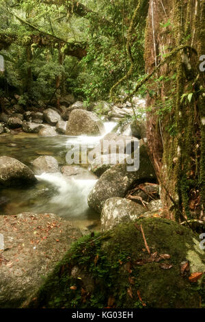 foreground rock and rocky stream flowing through Gorge located in the Daintree National Park rainforest , North - Stock Photo