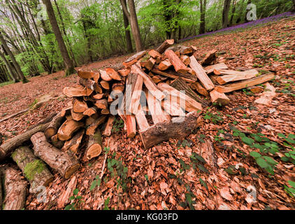 Woodpile for charcoal production in bluebell wood, Wakehurst, Surrey, England - Stock Photo