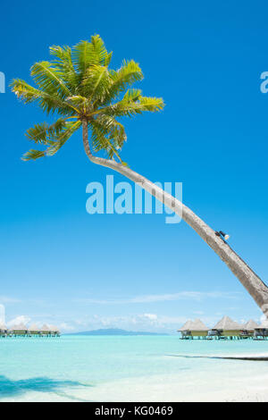 Palm tree with bungalows over water in Bora Bora, French Polynesia - Stock Photo