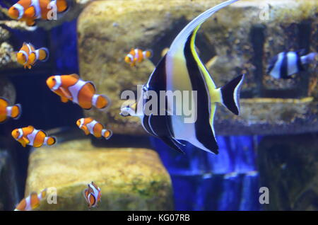 Beautiful fishes in aquarium at Atlantis the Palm, Dubai - Stock Photo