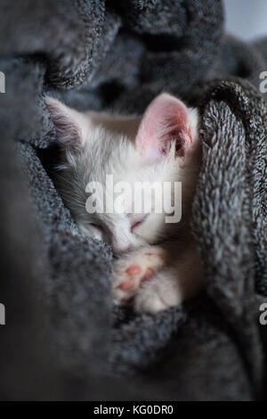 Cute little ginger kitten is sleeping in soft blanket on wooden floor - Stock Photo
