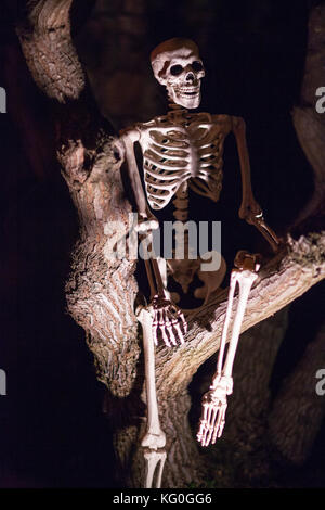 Scary Halloween human skeleton decoration sitting in a haunted tree with spooky lights - Stock Photo
