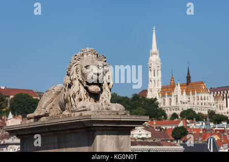Hungary, Budapest, The Lion sculpture from 1852 on Chain Bridge and Matthias Chuch in the background - Stock Photo