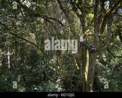 DJI Mavic Pro drone flying in the Batang Toru forest. New orangutan species discovered in Batang Toru, North Sumatra. - Stock Photo