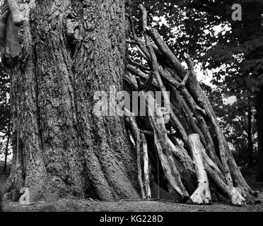 big old tree lean on me black and white image - Stock Photo