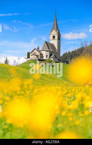 Blooming of yellow flowers around the alpine church of Schmitten, District of Albula, Canton of Graubunden, Switzerland, - Stock Photo
