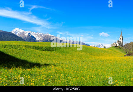 Panoramic of valley covered with yellow flowers, Schmitten, District of Albula, Canton of Graubunden, Switzerland, - Stock Photo