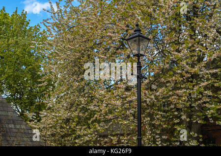 Lamp post between the trees in autumn at England UK - Stock Photo