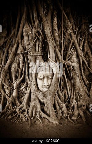 Stone Buddha head statue stands within the branches of a tree in a temple of Ayutthaya, UNESCO World Heritage Site, - Stock Photo