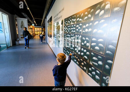 Child looks at panels on the wall, Zoological Museum, University of Copenhagen, Denmark, Europe - Stock Photo