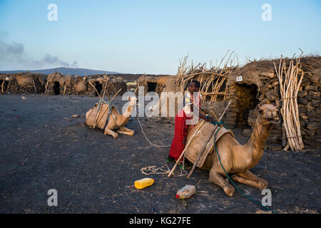 Afar man loading a camel in a camp on the foot of Erta Ale, Danakil depression, Ethiopia, Africa - Stock Photo