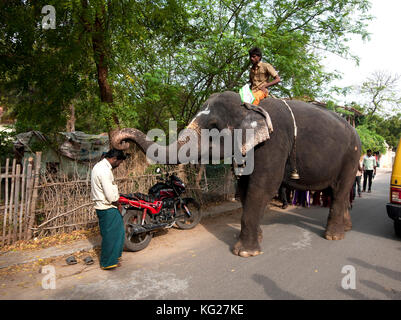 Temple elephant pausing to bless a man in the street with its trunk, Tranquebar, Tamil Nadu, India, Asia - Stock Photo
