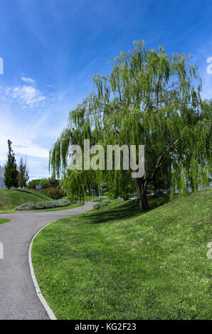 Weeping willow tree in an tidy urban park whit trees and flowers - Stock Photo