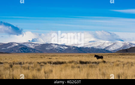 Panorama of the Kurai steppe in the autumn against the backdrop of towering snow peaks. Russia, Siberia, the Republic - Stock Photo