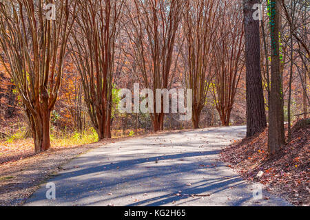 Alley with leopard trees and curved road in Lullwater Park in sunny autumn day, Atlanta, USA - Stock Photo