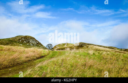 Sycamore Gap in autumn with a view of Hadrian's Wall following contours of hills against a a bright blue sky in - Stock Photo
