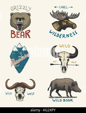 set of engraved vintage, hand drawn, old, labels or badges for camping, hiking, hunting with moose, grizzly bear. - Stock Photo