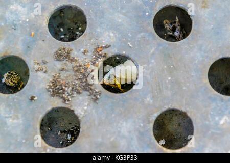 Cigarette butts in rubbish bin, top view. Extinquished cigarettes and ash in trash bin. - Stock Photo
