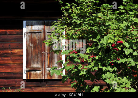 garden, rest, spring, summer, green, calm, beauty, lifestyle, slow life, home, natural, beauty, window, natural, - Stock Photo
