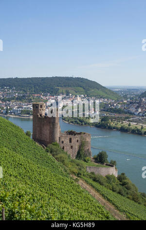 Rüdesheim am Rhein, ruined castle Ehrenfels with view to Bingen - Stock Photo