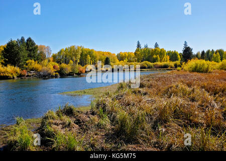 A view of the Deschutes river in Autumn as the aspen trees change color from green to gold, near Bend, Oregon - Stock Photo