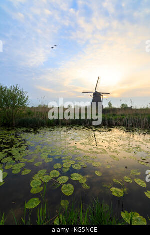 Sunrise on windmill reflected in the canal framed by floating leaves Kinderdijk Molenwaard South Holland The Netherlands - Stock Photo